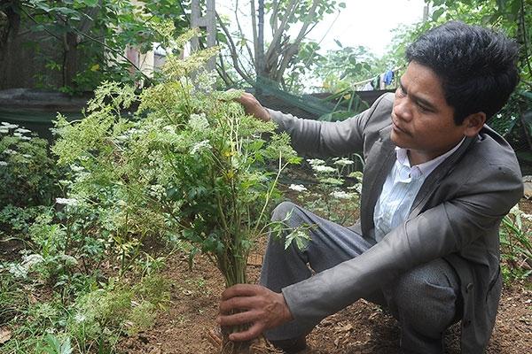 Thoát nghèo bằng việc trồng dược liệu